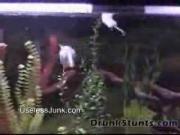 คลิป ปลา ปิรันยา สงสาร น่ารัก สัตว์ fish