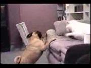 คลิป หมา แมว ขำกลิ้ง