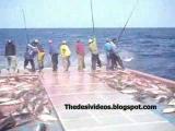 กีฬา สัตว์ ขำ ปลา บ้า ตกปลา ล่าสัตว์ เทพ