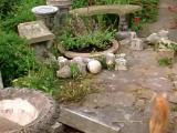 คลิป น้องเหมียวเมา รุมเสพ Catnip ดอกหญ้า ชนิดหนึ่ง