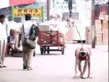 แปลก ลิง อินเดีย ประหลาด อาชีพ พิสดาร ไม่น่าเชื่อ