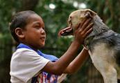หมา ช่วย ชีวิต  เด็ก ฮีโร่ อุบัติเหตุ