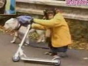 ปังกับเจมส์ pan james ขำกลิ้ง ลิงกับหมา pankun ปังคุง