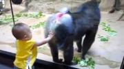 ลิงบาบูน ต่อสู้ แกล้ง ตกใจ ปกป้อง ลูกลิง เด็ก