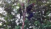 2หนุ่มรัซเซียเมา ปีนต้นไม้ แต่กิ่งไม้หัก ตกลงมาไม่เป็นท่า