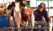 คลิป fishing  ตกปลา  ปลาประหลาด   ปลาช่อนอะเทซอล  ปลาชะโด