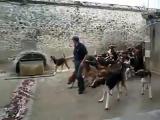 คลิป ปล่อยน้องหมา 120 ตัว มากินข้าวพร้อมกัน นาทีนี้ดูวุ่นสุดๆ