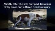 ประทับใจ ช่วยเหลือ ลูกสุนัข ซึ้ง