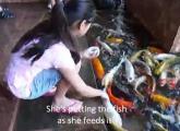 คลิป ให้อาหาร ปลา เชื่อง ญี่ปุ่น แปลก เหลือเชื่อ หาดูยาก