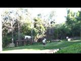 เสือโคร่งเผือกกระโดดโชว์ ตัวลอยพริ้วกลางอากาศ
