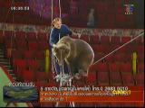 เรื่องเล่าเช้านี้- การแสดง โชว์หมีไต่ลวด