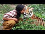 เสือโคร่ง เป็นเพื่อน คนอินโดนิเซีย