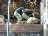 คลิป สิงโตกัดพี่เลี้ยงโชว์คนดู