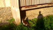 คลิป แมวใครหว่า...แอบปืนรั้วเข้าบ้าน ดูสกิลซะก่อน เก่งได้ใจ