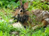 กระต่ายที่น่ากลัวที่สุดในโลก ใบหน้ามีเขา แปลกจริงๆ