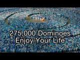 สุดยอด โดมิโน่ 275,000 ชิ้น Guinness World Record