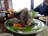 คลิป  เมนูทารุณ! ปลาทอดรอดชีวิต