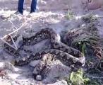 จับงูเหลือมยาวเกือบ 5 เมตร หนักกว่า 50 กิโล