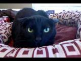 แมวดุ แมวแสนดี และน้องหมาขี้กังวล อยู่บ้านหลังเดียวกัน