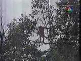 ระทึกภาพจริงคนตกต้นไม้ตายคาที่ต่อหน้าช่างภาพ