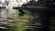 หมู ฮีโร่ น้ำใจ แพะ น้ำตก จม ดิ่ง สุดยอด เหลือเชื่อ ร้อง ด่า ว่ายน้ำ