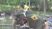 คลิป เชียงใหม่เฮฮา 'บอลโลกช้าง' เริ่มแล้ว ปางช้างแม่สาจัดช้างแสนรู้โชว์เตะบอล รับกระแสฟุตบอลโลก