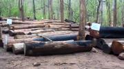 คลิป ยึดไม้สักเถื่อนเพิ่มอีกว่า 380 ท่อน ซุกซ่อนป่ารอบหมู่บ้านห้วยไก่ป่า แม่ฮ่องสอน