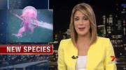 แมงกะพรุนประหลาดที่เชื่อว่าเป็นสายพันธุ์ใหม่บนโลก โดยมันมีลักษณะตัวสีม่วงสดใส แล