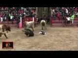 งานนี้มีตาย วัวกระทิง ชนคนอย่างจัง เทศกาลวิ่งวัวที่สเปน