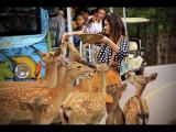 สวนสัตว์ขอนแก่น KhonKaen Zoo บรรยากาศ Sky Walk สวนน้ำ Water Park หนูฮิปโปแคระ เมียร์แคต MeerKat หนูย