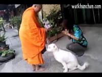 สุนัข ตักบาตร แสนรู้ พระ