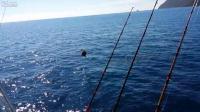 ตกปลากำลังจะได้ เจอ อินทรี ฉกไปซะงั้น