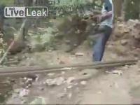 งูจงอาง ตัวใหญ่มาก ที่ อินเดีย