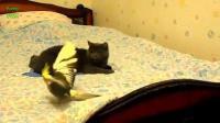 รวมคริป นกแก้ว กับเจ้าแมวเมียว