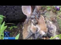 กระต่ายกลายพันธุ์ที่แปลกประหลาดที่สุดในโลก