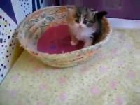คลิป ลูกแมว น่ารักสุดๆ