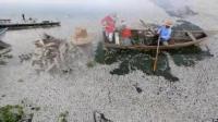 คลิป พบปลาอย่างน้อย 48 ตันลอยตายเลื่อนทะเลสาบแห่งหนึ่งทางตะวันตกของเม็กซิโก
