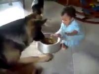หมา น่ารัก เด็ก กินข้าว แย่งข้าว ตลก แปลก ฮา