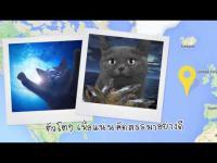 ชีบา,sheba,สัตว์เลี้ยง,แมว,cat,อาหารแมว