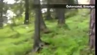 หมา หมาล้ม กวาง ป่า