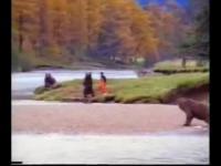 คนสู้กับหมีด้วยมือเปล่า (ใจไม่ถึงห้ามดูอาจหัวใจวายได้่)