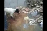 คลิป คนใจร้าย! สับปากหมา หมาคงทรมารน่าดู
