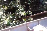 อนาคอนด้า งู งูยักษ์