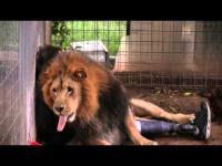 วิญญาณหมาสิงอยู่ในร่างของสิงห์โต (ไม่เชื่ออย่าลบหลู่)