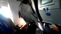 คลิป เหยี่ยว สัตว์เลี้ยงโดยสารไปกับเครื่องบิน 2