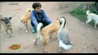 คลิป เรื่องเล่าเช้านี้ - เจ้าทอง ห่านแสนรู้ชอบเล่นกับน้องหมา