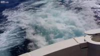 สิงโตทะเลแสนรู้ ขึ้นเรือมาขอปลา