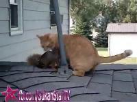 กระรอก แมว เหมียว เพื่อน ซี้
