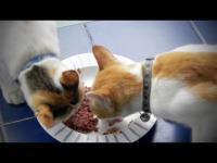 แมว อาหารแมว โลตัส อาหารแมวราคาถูก แมวสามสี