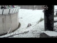 แพนด้าตัวนี้ฟินสุดๆ เมื่อสวนสัตว์ปล่อยออกมาเล่น หิมะ